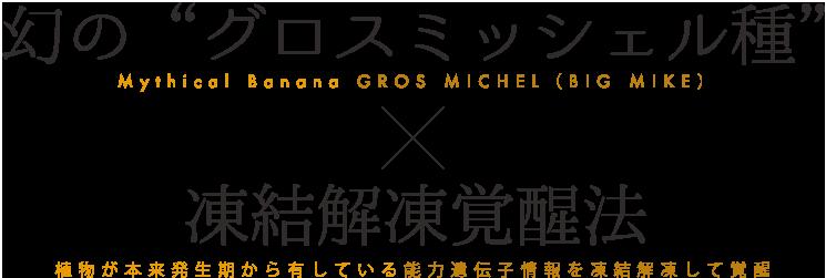 """幻の""""グロスミッシェル種/凍結解凍覚醒法"""